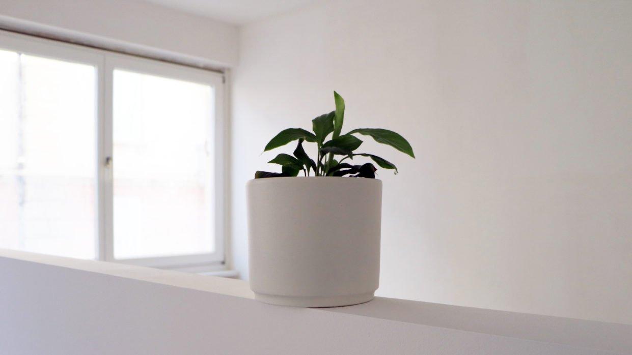 Einsame Topfpflanze sucht Gesellschaft